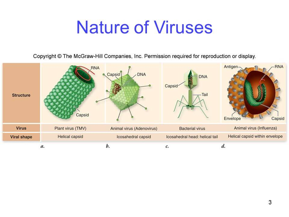 nature of virus